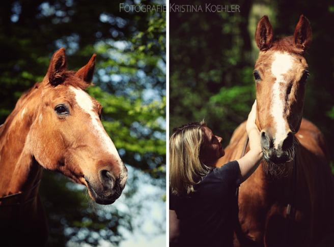horse photography. fotografie kristina koehler