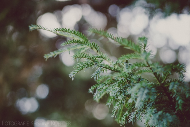 impressions. fotografie kristina koehler