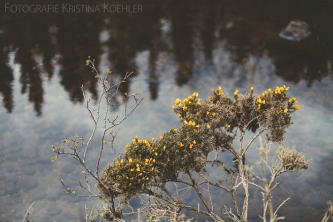a little piece of beauty. fotografie kristina koehler