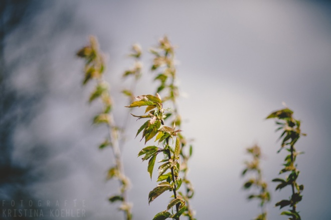 spring. fotografie kristina koehler