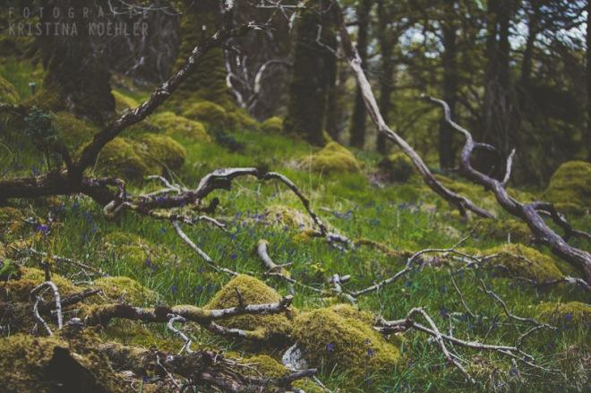 Scotland. Fotografie Kristina Koehler