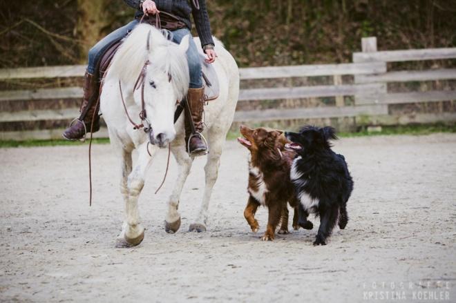life with pets. fotografie kristina koehler